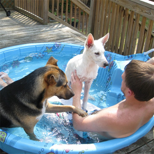 water cool off with pets in small pool.jpg