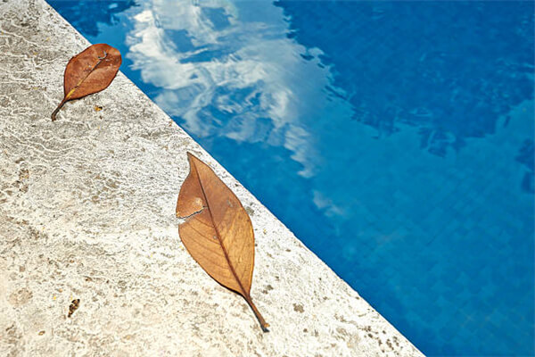 fallen leaves impact swimming pool.jpg